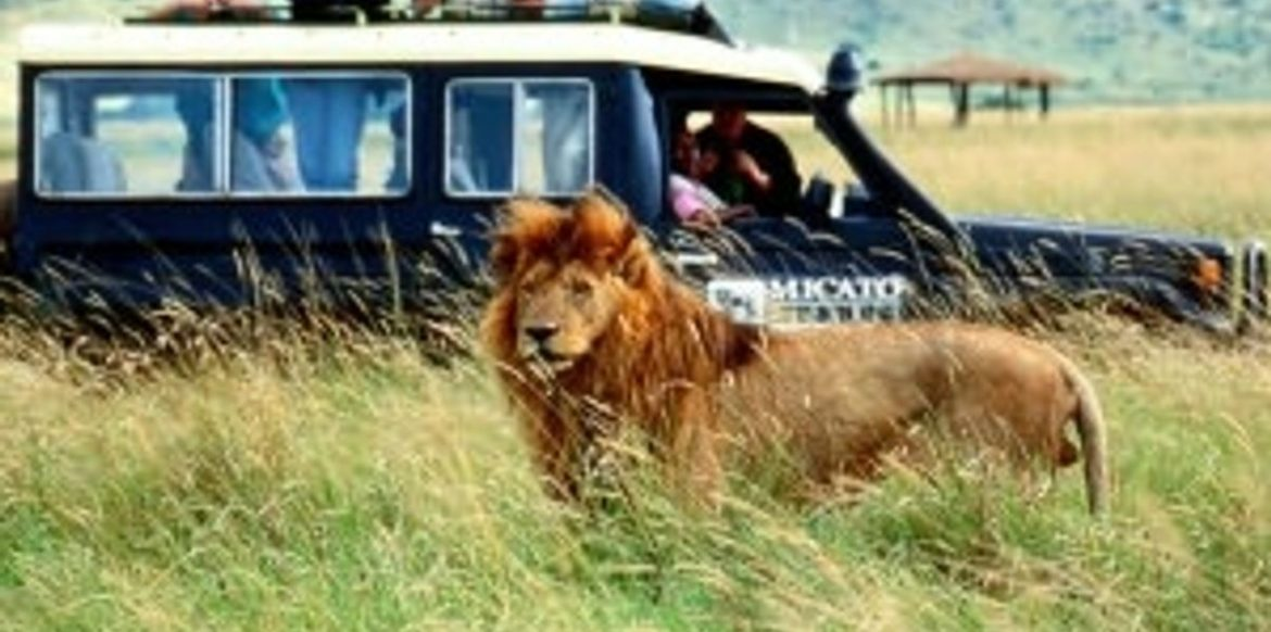 need to choose a luxury safari